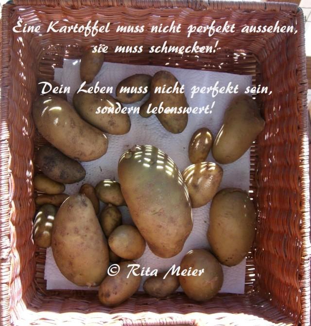 Kartoffel perfekt
